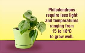 the best indoor plants a perfect list of the best indoor plants make the right choice