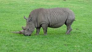 sle resume journalist position in kzn wildlife ezemvelo accommodation indywatch feed africa