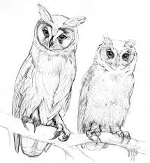 pencil coloring pages 259 best kleurplaten owls images on pinterest coloring books