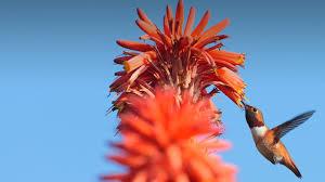 plants native to san diego plants san diego zoo animals u0026 plants