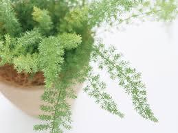 interesting decorative flower pots indoor plants images decoration
