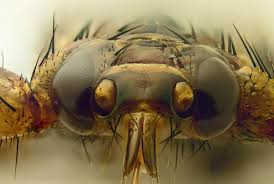 5 Up Photo Album Diptera Info Photo Albums Lipoptena Cervi 5