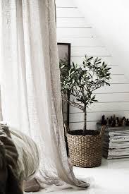 Tall Indoor Plants Low Light 25 Best Indoor Fig Trees Ideas On Pinterest Fiddle Leaf Fiddle