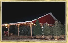 christmas tree farm choose cut your own living or pre cut shop
