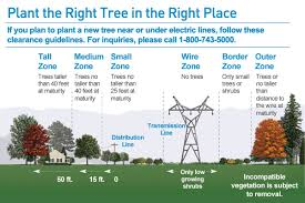 two reminders during arbor week right tree right place and call