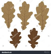 set vector oak leaves your design stock vector 215802895