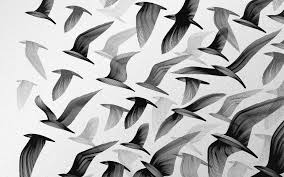 white and black wallpaper black and white images of birds 1 high resolution wallpaper