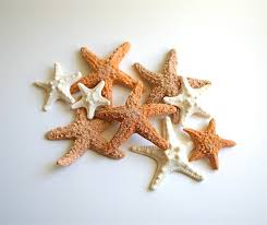 starfish decorations starfish mirror decor shell mirror starfish seashell within