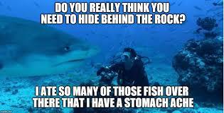 Shark Meme - annoyed shark imgflip