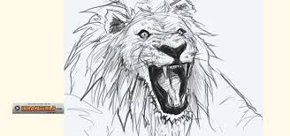 how to draw a bemused lion head for beginners drawing