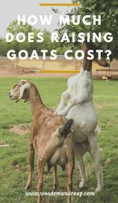 how much does a goat cost weed u0027em u0026 reap