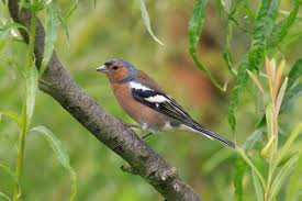 Scare Birds Away From Patio Keeping Birds Away Thriftyfun