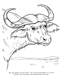 animal drawings coloring pages cape buffalo drawing animal