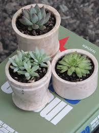 succulent planter courtney out loud