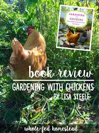 gardening with chickens by lisa steele book review whole fed
