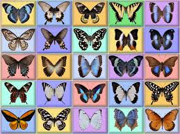 free wallpapers butterflies page 6