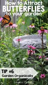 10 great plants for a butterfly garden helpful tips pinterest