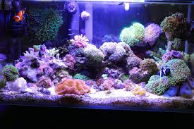 fluval edge marine light the insatiable fluval edge my first nano reef reef central
