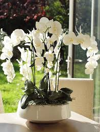 orchid arrangements 67 best orchid arrangement images on floral