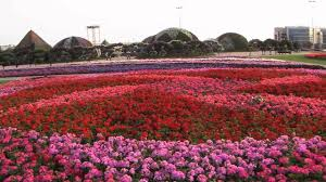 Pictures Of Gardens And Flowers by Dubai U0027s Miracle Garden Has 45 Million Flowers Youtube