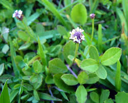 non native plants in florida experts outline best choices for coastal landscapes