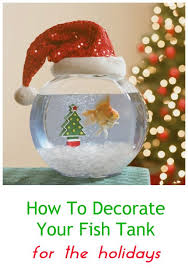 Betta Fish Decorations 41 Best The Better Betta Images On Pinterest Fish Aquariums