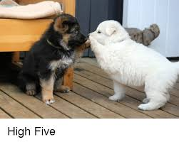 High Five Meme - high five funny meme on sizzle