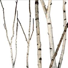 Birch Forks 5 up to 8