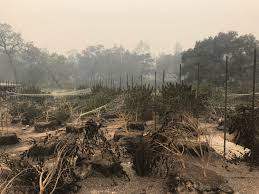 North Bay Fire Prevention by How To Help Support Wine Country Fire Victims Eater Sf