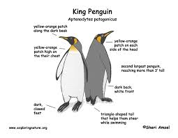 natural selection and evolution emperor penguin aptenodytes