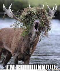 Moose Meme - moose by omgoshers meme center