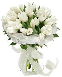white tulips white tulips florist flowers romania
