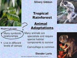 Plant Adaptation In Tropical Rainforest Food Chains Food Webs And The Transfer Of Energy Ppt Download