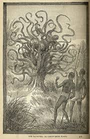 native plants of africa man eating tree monster wiki fandom powered by wikia