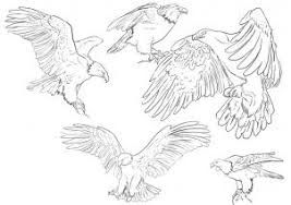 drawn bald eagle easy draw pencil and in color drawn bald eagle