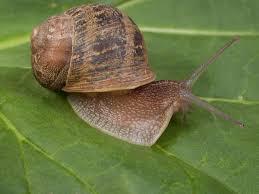 slugs and snails in the garden hgtv