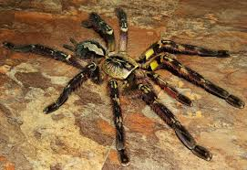 world s most deadly spiders elite facts