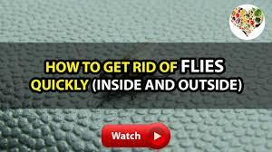 How To Get Rid Of Backyard Flies by Bh4u How To Get Rid Of Flies Quickly Inside And Outside Youtube