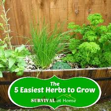 123 best home garden images on pinterest gardening container