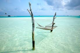 picture of the day great place for a hammock twistedsifter