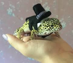 leopard gecko in a tux lizard stuff pinterest geckos and lizards