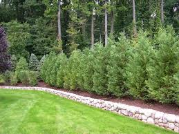 Fence Landscaping Ideas Best 25 Fence Landscaping Ideas On Pinterest Privacy Fence