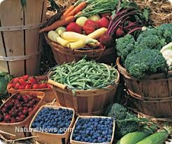 raw food diet news articles and information