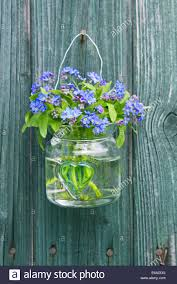 forget me not decoration flower vase country style stock photo