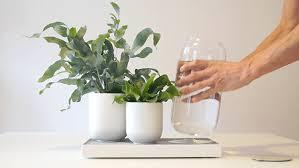 tableau pikaplant u0027s self watering system for plants u2014 urdesignmag