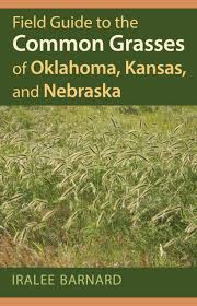 native plant guide field guide to the common grasses of oklahoma kansas and nebraska