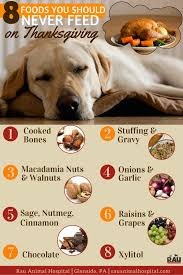 36 best holidays with pets images on pet safe pet