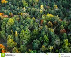 different shades of green royalty free stock images image 28410859