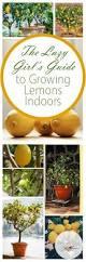 best 25 fruit tree garden ideas on pinterest patio fruit trees