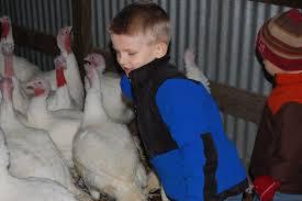 thanksgiving and kids raising fruitful tots week 6 thanksgiving and turkeys